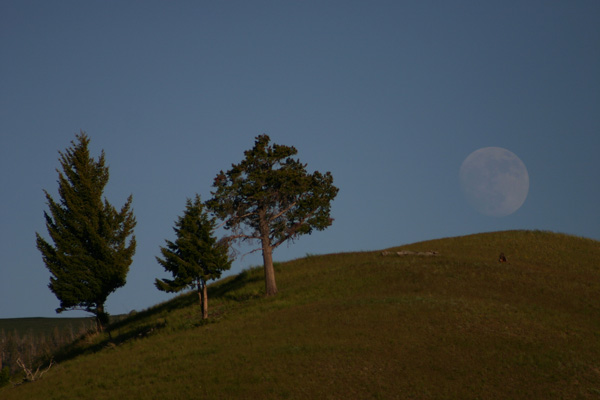 yellowstone moon