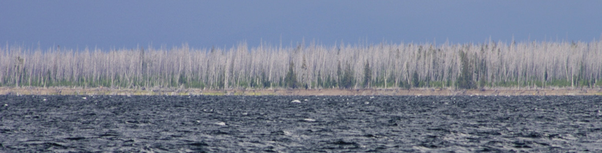 yellowstone shoreline